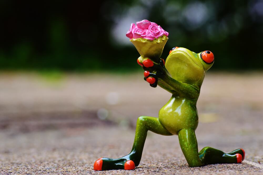 frog giving gift